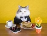 Каким сухим кормом лучше кормить кошку