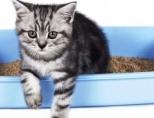 Запор у котенка: что делать?