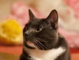 Кастрация кота: в каком возрасте лучше делать?