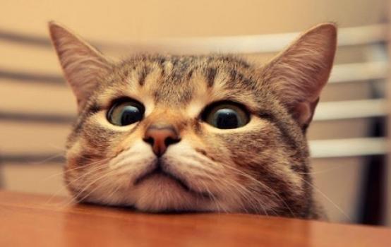 Кошка гуляет, как успокоить?