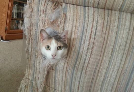 члена все ли котята портят мебель девчонки насаживаются огромные