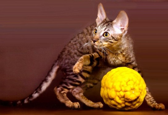 Мячик и кошка!