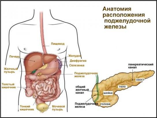 Поджелудочная болит при беременности