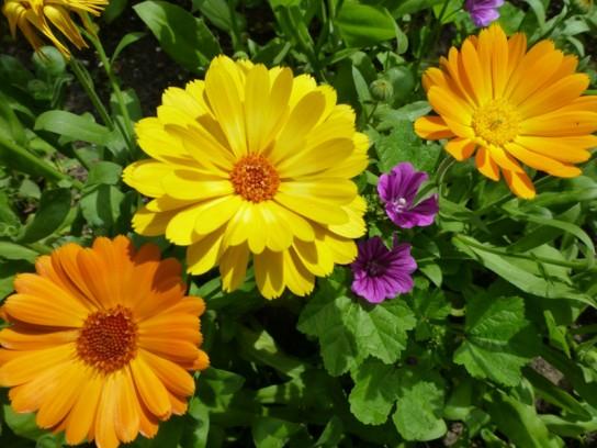 Какие надо садить цветы осенью