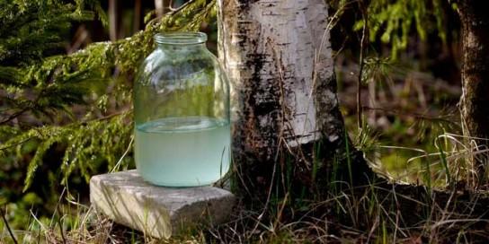 Березовый сок - свойства и польза Им полощут горло при ангине
